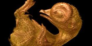 alemonde video cailleill_4407319_0424-nikon-quail-970-630x420