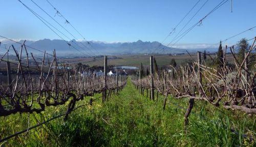 aafrique sud-demorgenzon-a-stellenbosch-a-50-km-au-nord-du-cap-le-15-aout-2014_5018754