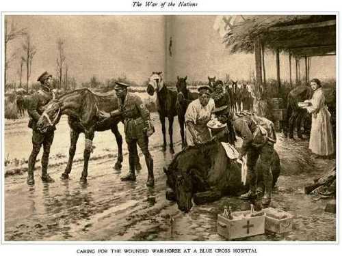 aanimaux chevaux blessés