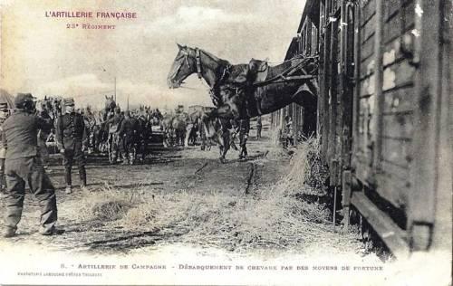 aanimaux chevaux débarquement