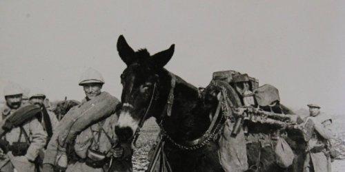 aanimaux-chevaux-ont-joue-un-role-important-durant-la-premiere_1462535_800x400