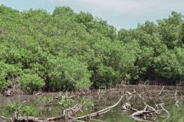 aguadeloupe mangrove20110207_174848
