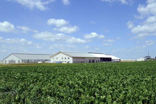 alemondela-ferme-des-mille-vaches-dans-la-somme_56c72c568f3042a1bd41f6fe01a2ed8e