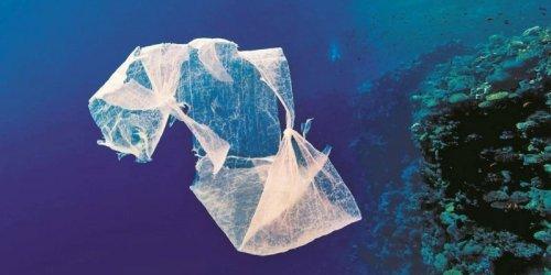 aso-dechets-plastiques-mettent-en-danger-l-ecosysteme-marin_2127404_800x400