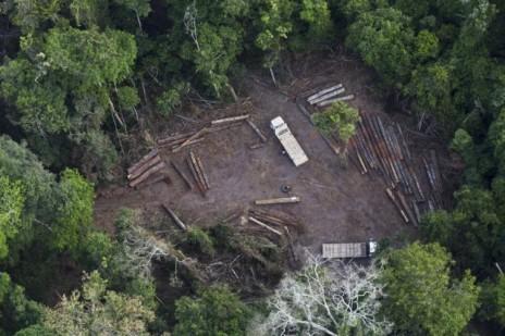 arue8903illegal-logging-640x426