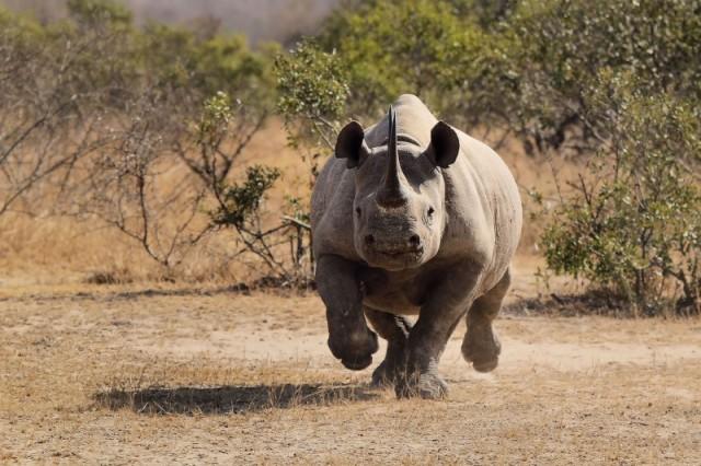 Black_Rhino_Charge1