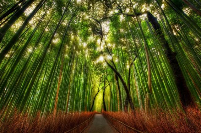 Foret-bambous-Arashiyama-640x426
