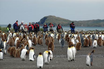 aantarticquetourisme_antarctique