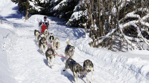 aretordica-accueille-chaque-annee-les-passionnes-de-ski-joering-et-chiens-de-traineaux