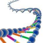 eBay-genome-auction