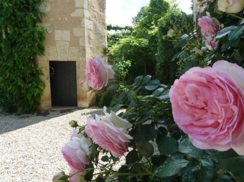 ajardin poulaines rose3197_PhotoJardin
