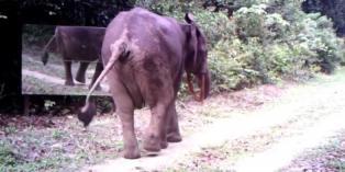h_11_ill_4646815_elephant