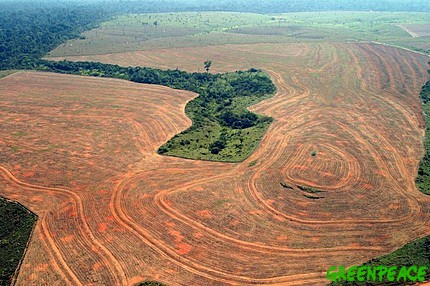 NOVO PROGRESSO, PARç STATE, AMAZON, BRAZIL September, 2004 Illegal deforestation for soy production in Novo Progresso, State of Par‡ © Greenpeace/ Alberto CŽsar GREENPEACE HANDOUT - NO RESALE - NO ARCHIVE - OK  FOR ONLINE REPRO - CREDITLINE COMPULSORY