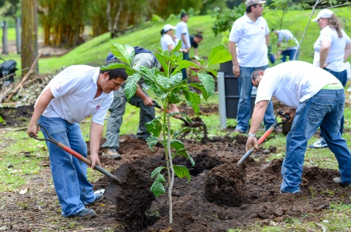 areforestationPlanting-Trees-1-1000x662