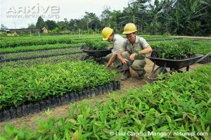 areforestationseedlings-of-tropical-trees-growing-in-a-nursery-in-brazil-south-america