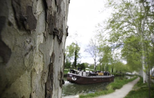 acanal midi-les-platanes-bordent-le-long-du-canal-du-midi-ici-pra-s-de-ramonville