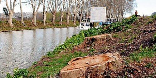 acanal midifin-2014-25-des-arbres-du-canal-auront-ete-abattus_786332_510x255