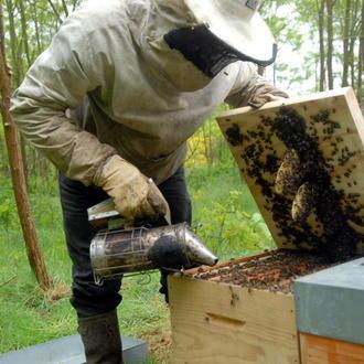 La production de miel a été divisée par deux en 2013, mais de plus en plus de particuliers acquièrent des ruches.
