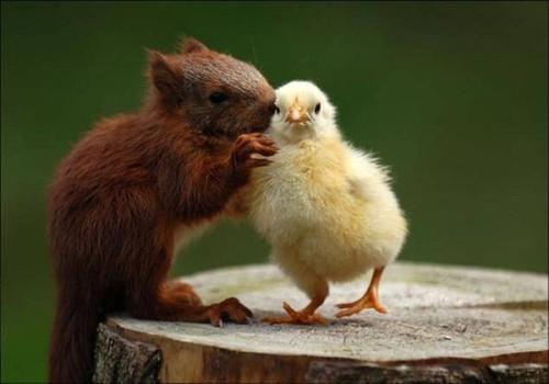!amour animauxcid_part1_02050908_03090701@orange