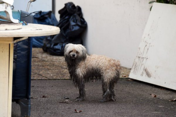 TOPSHOTS A wet dog stands next to damages in a house, on October 4, 2015, in Mandelieu-la-Napoule, southeastern France, after violent storms and flooding killed at least 16 people, strucking the chic French Riviera overnight, with three people still missing, President Francois Hollande said on October 4. AFP PHOTO / BORIS HORVAT