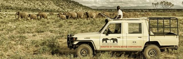 aéléphantsste-tracking-elephants