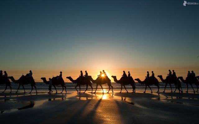 bedouins-sur-des-chameaux,-couchage-de-soleil-a-la-mer-162812