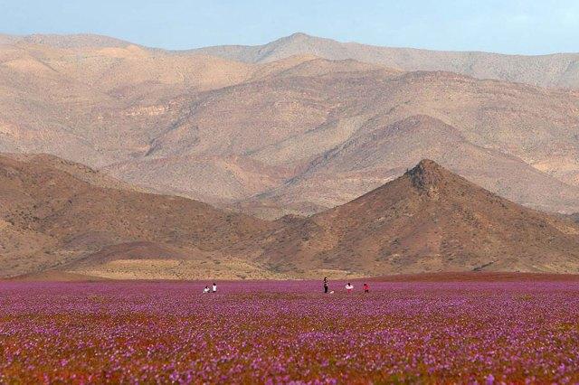 desert-atacama-fleurs-chili-3