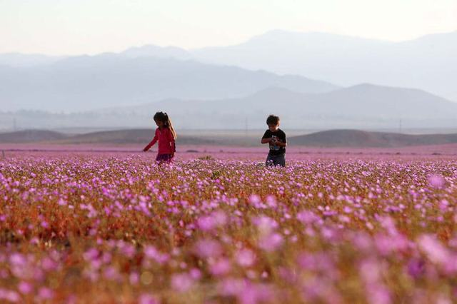 desert-atacama-fleurs-chili-4