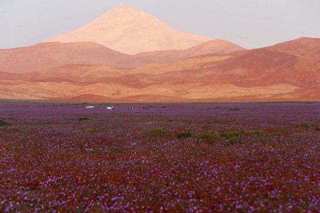 desert-atacama-fleurs-chili-6