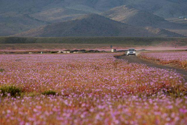 desert-atacama-fleurs-chili-8