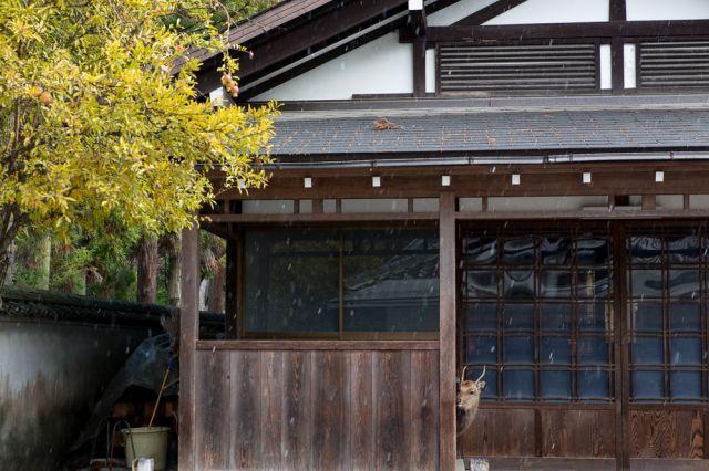 4840793_6_1f84_dans-l-ile-de-miyajima-prefecture-de_3f55b9557c96e9e1db7ca123aaa1fe80