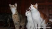 chats actu