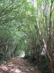 acheminla-commune-dentrammes-veut-preserver-ses-chemins-ruraux