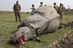 arhinoDes-braconniers-tues-en-Inde_article_landscape_pm_v8