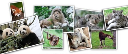 aNRbeauvalzooparc-de-beauval