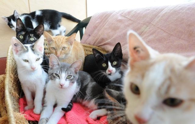 aSPA648x415_nantes-le-24-08-2010-de-nombreux-chats-a-adopter-dans-une-chatiere-de-la-spa