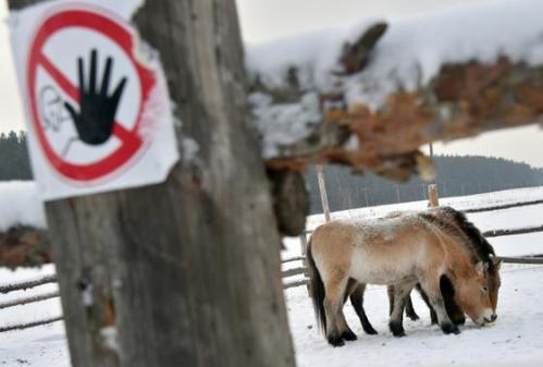 En-30-ans-Tchernobyl-est-devenu-une-reserve-inedite-d-animaux-sauvages_slider
