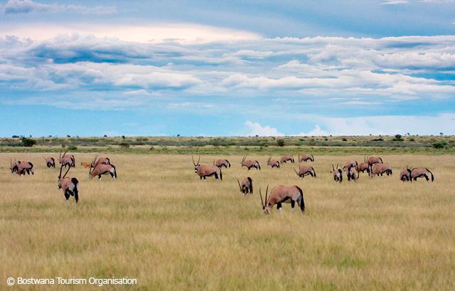 1---central---gert---khutse-gemsbok-_r_-botswana-tourism-organisation