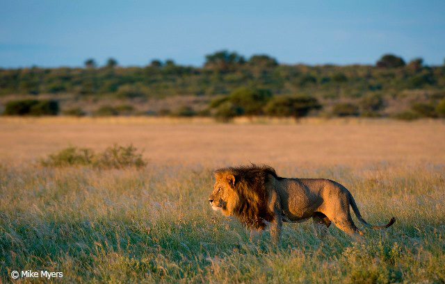 2--mm_kalahariplains_wildlife_09_25-_r_-mike-myers