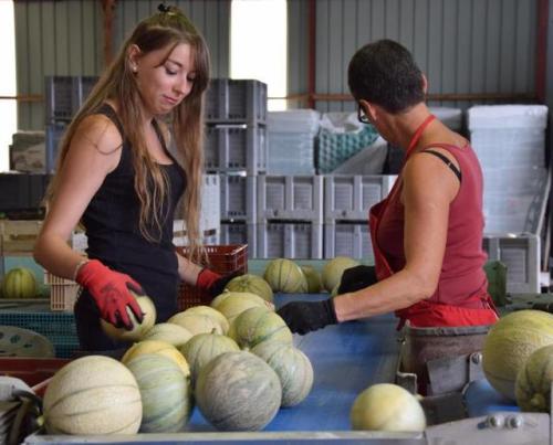 Jobs d'été - Melons