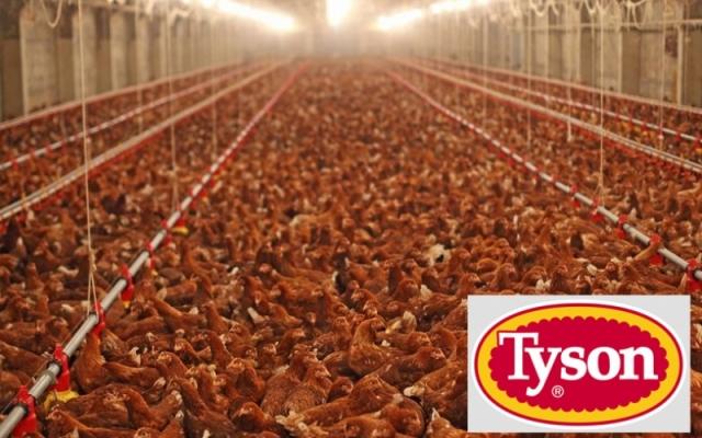 Tyson-Chicken-Slaughterhouse