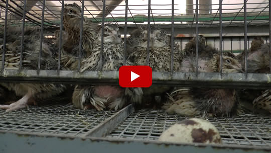 quail-investigation-video-still