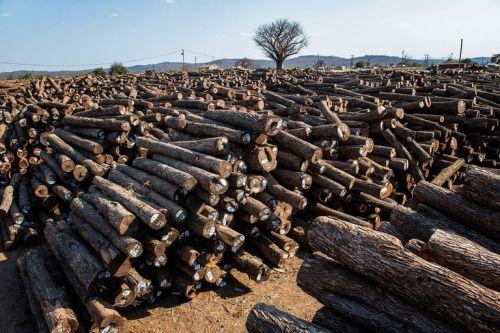 4638949_6_0bcc_stockage-de-troncs-d-arbres-au-mozambique_a157b30931aa27a695deecc598dff54f