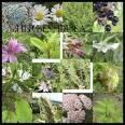 herboristerie Lamaignat