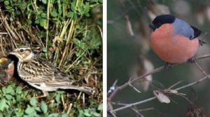 biodiversite-ces-oiseaux-qui-nous-quittent0