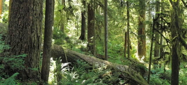 forest_on_olympic_national_park_three_lakes_trail