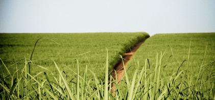 plantation-production-ethanol