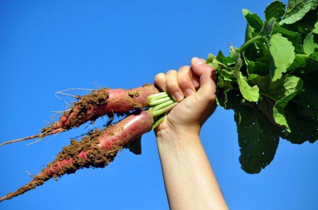 permaculture-ferme-bec-hellouin-rentable-2