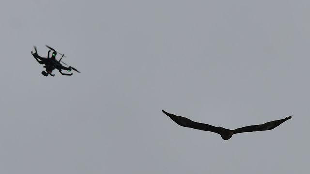 la-police-neerlandaise-teste-des-aigles-pour-capturer-des-drones_5509789