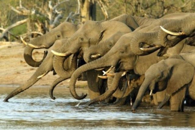 parc-elephants